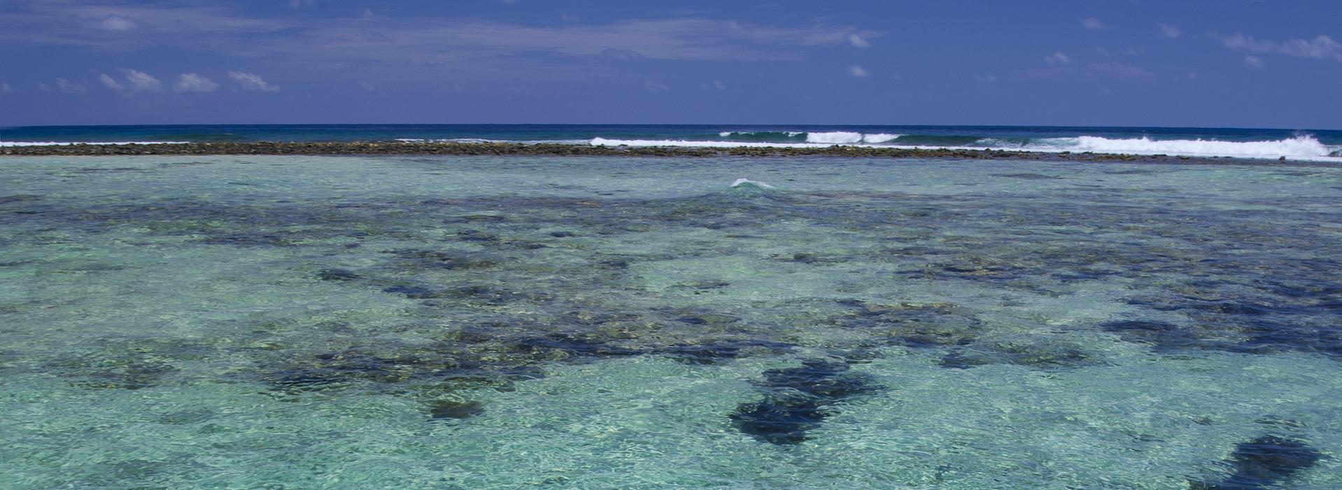 3-Stop Coral Reef Snorkel