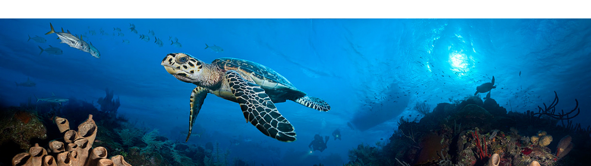 Ocean Frontiers
