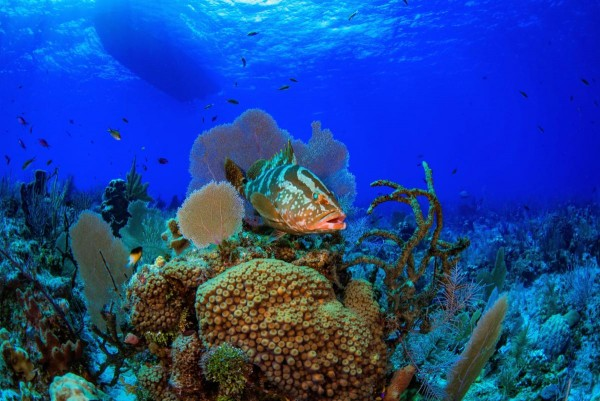 Bloody Bay Expeditions to Little Cayman, Day-trips from Grand Cayman with Ocean Frontiers