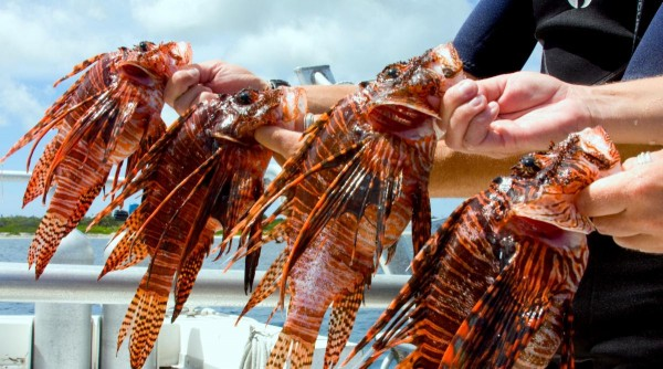 Dive with a purpose, Earth Day Lionfish Class & Boat Dive