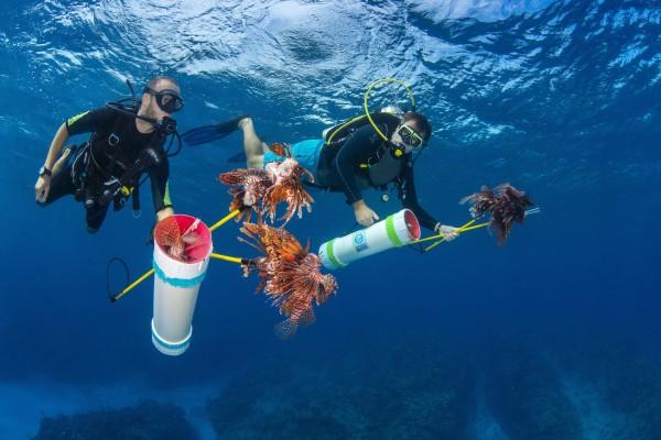 Lionfish Elimination Challenge 2020