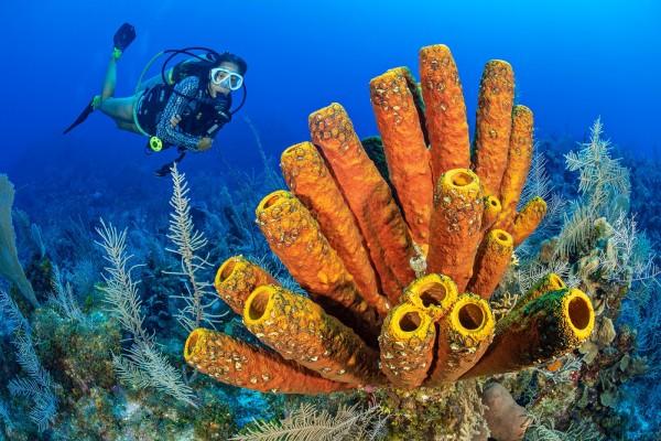 Peak Sponge - Reaching Maximum Sizes in a Generation