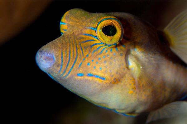 Fish ID Class