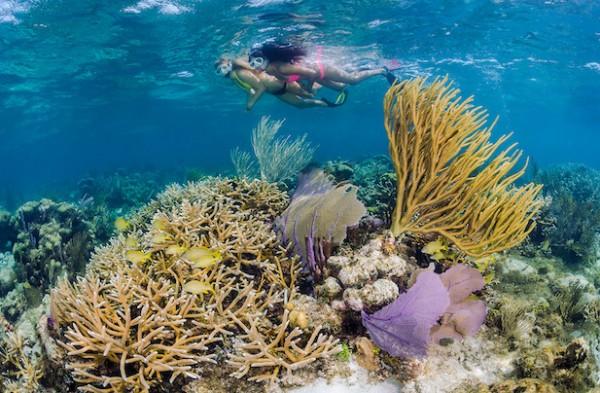 Reef & Rays