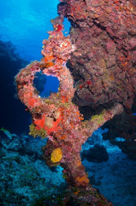 Summer Dive & Stay Package in Cayman for 5 Nights & 4 Days - Image 1