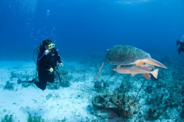 Signature Dive Package - US$275.00