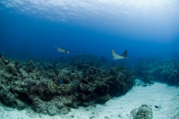 East End Classic Dive Package - US$525.00