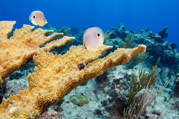 Seven Nights & Six Days Winter Dive & Stay Package in the Cayman Islands