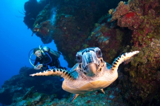 2-Tank Boat Dive in the Cayman Islands