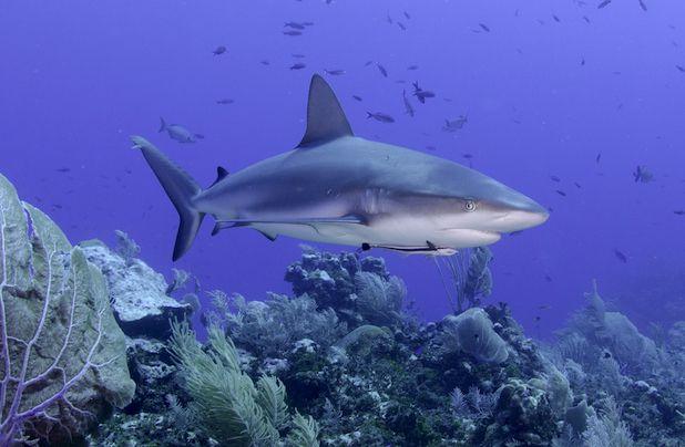 Shark Conservation Specialty Class