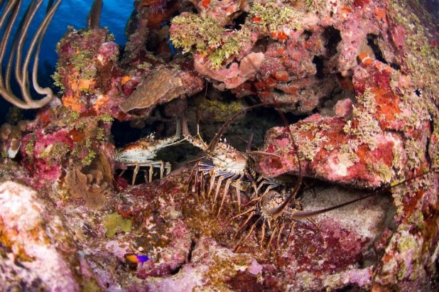 Cayman Sampler - US$333.00 - Dive Packages