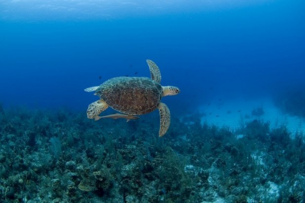 3 - Three Nights, two days of diving, breakfast and car rental for entire stay - Winter Dive N Stay Packages