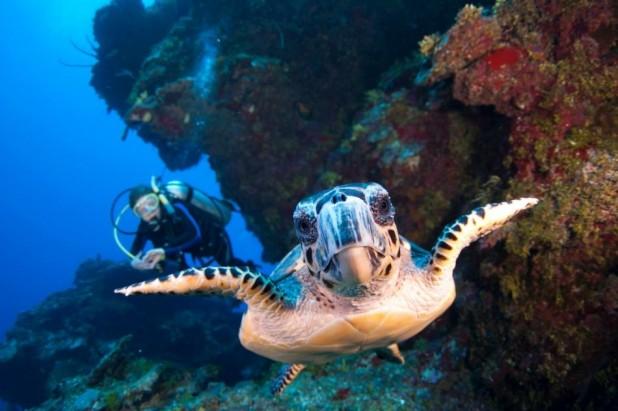 2-Tank Dive with Ocean Frontiers: