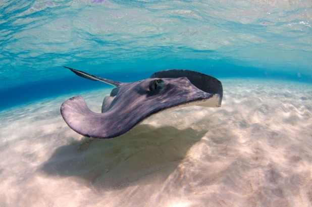Champagne Stingrays Snorkel Boat Trip in Grand Cayman - Champagne Stingrays