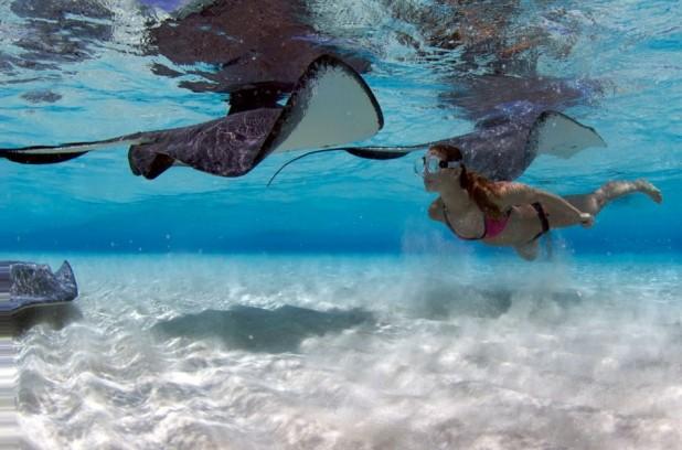 Stingray Sandbar Snorkel Boat Trip in Grand Cayman - Stingray Sandbar
