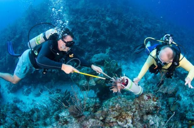 Lionfish Patrol in Grand Cayman
