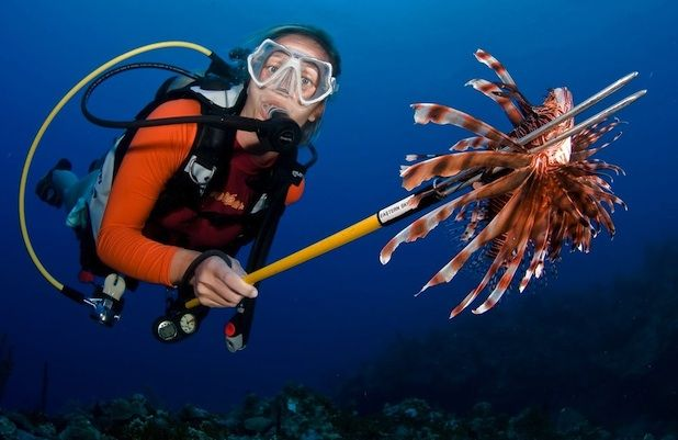 Lionfish Hunter Certification in the Cayman Islands