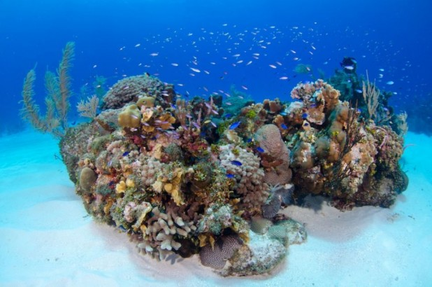 PADI Open Water Referral Course in the Cayman Islands - Referral Dives