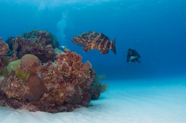 Late Riser Diver Package - US$415.00