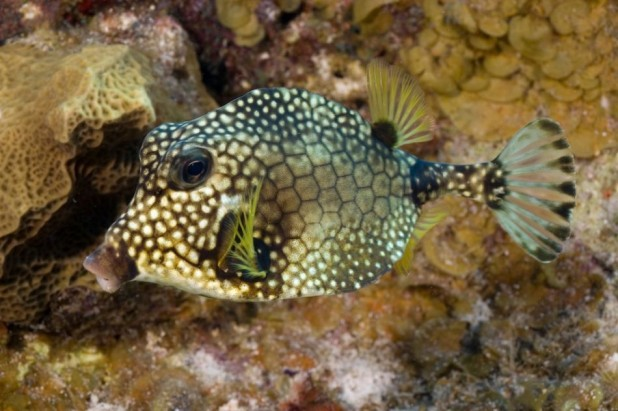 Best of Cayman Package - US$450.00 - Dive Packages
