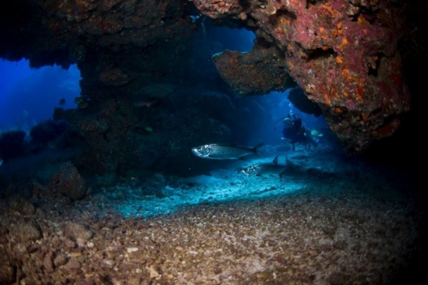 Five Nights & Four Days Summer Dive & Stay Package in the Cayman Islands - Summer Dive & Stay Packages