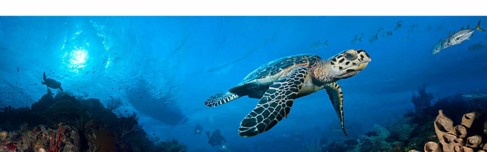 Marine Life - Ocean Frontiers