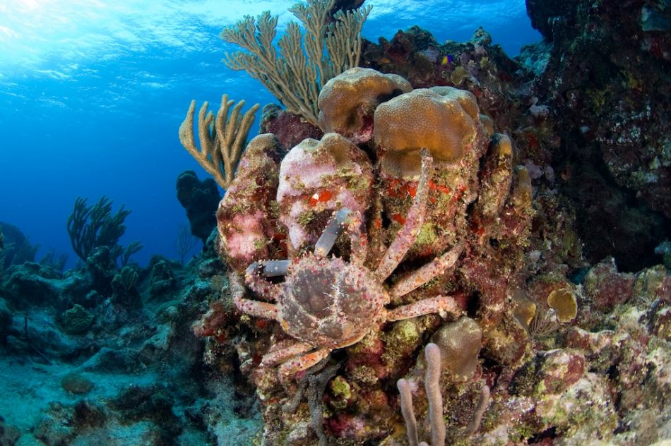 2-Tank Boat Dive in the Cayman Islands - Image 10