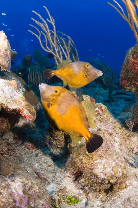 2-Tank Boat Dive in the Cayman Islands - Image 11