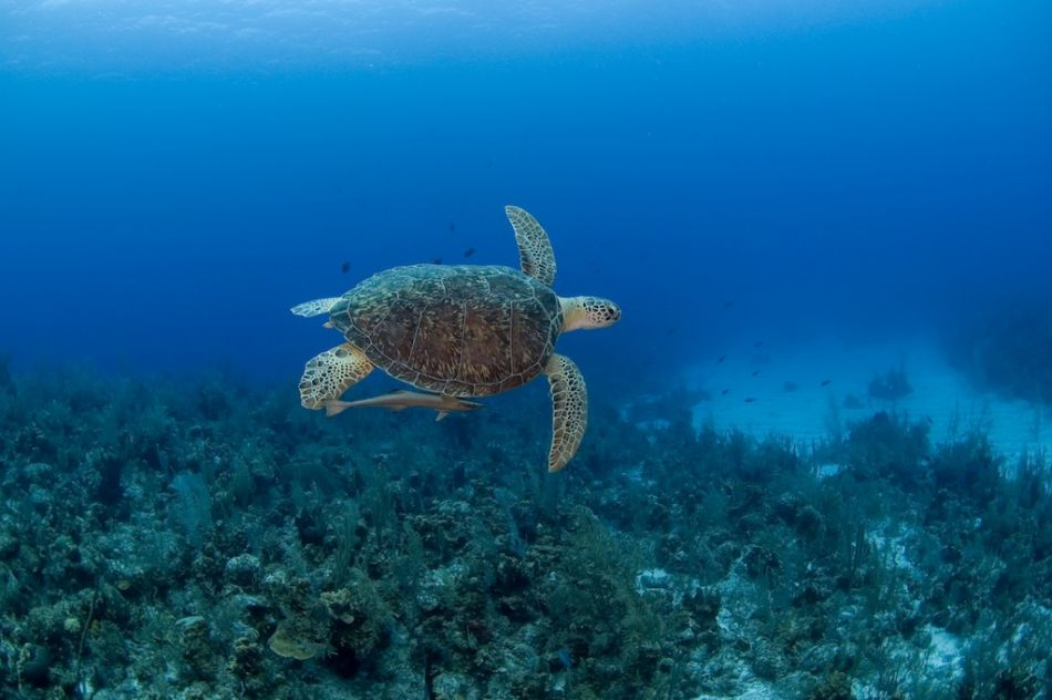2-Tank Boat Dive in the Cayman Islands - Image 18