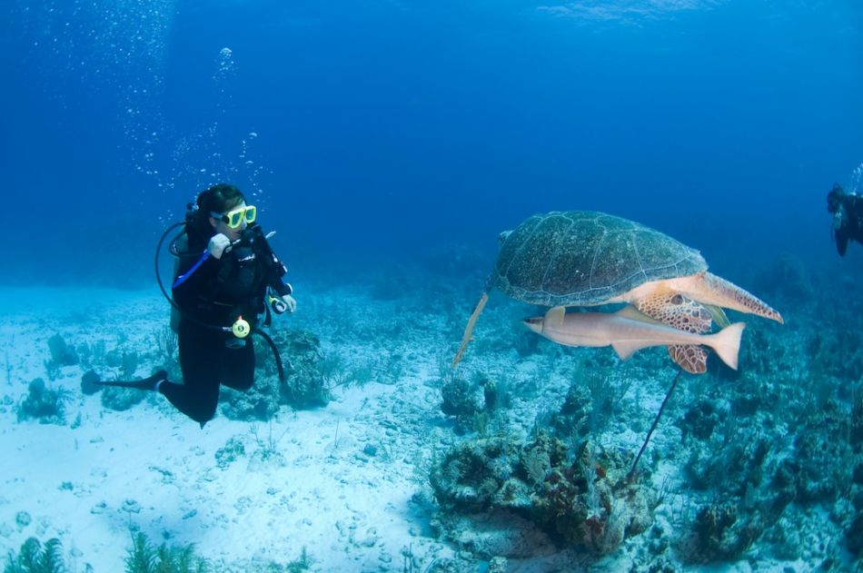 2-Tank Boat Dive in the Cayman Islands - Image 2