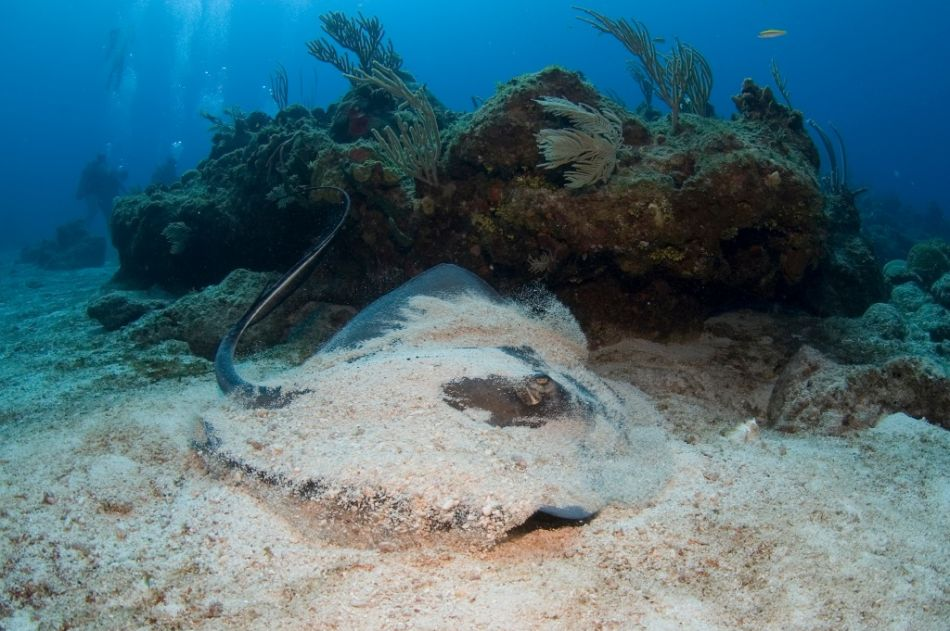 2-Tank Boat Dive in the Cayman Islands - Image 20