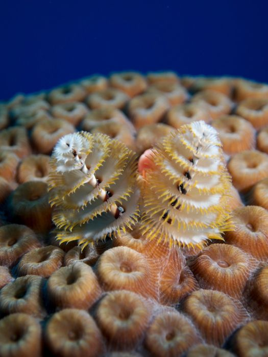 2-Tank Boat Dive in the Cayman Islands - Image 22