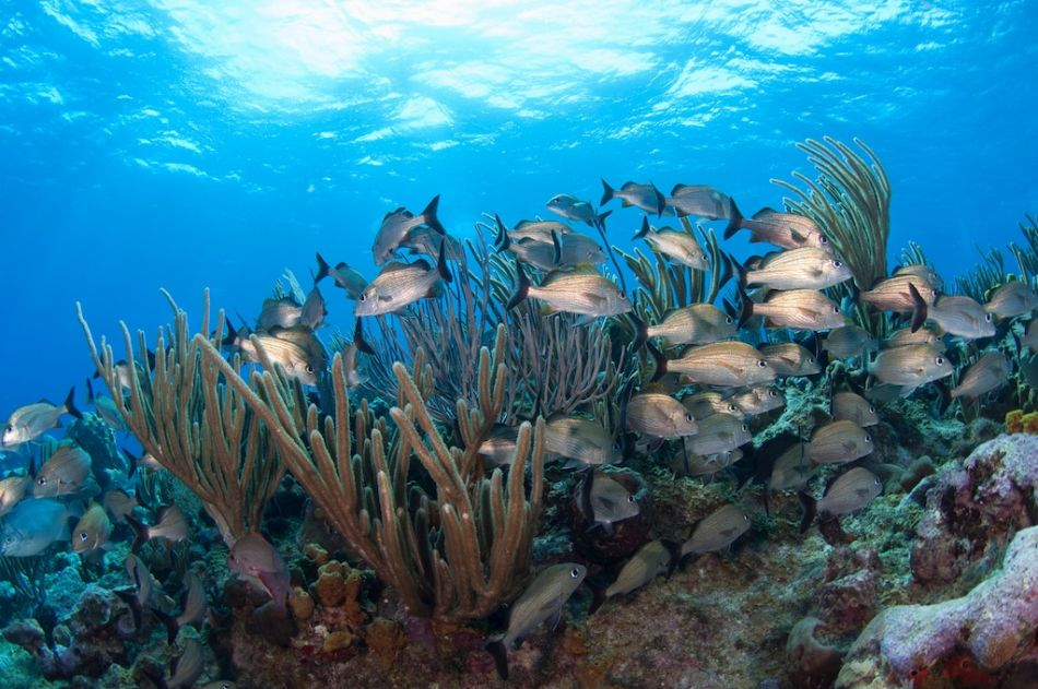 2-Tank Boat Dive in the Cayman Islands - Image 24