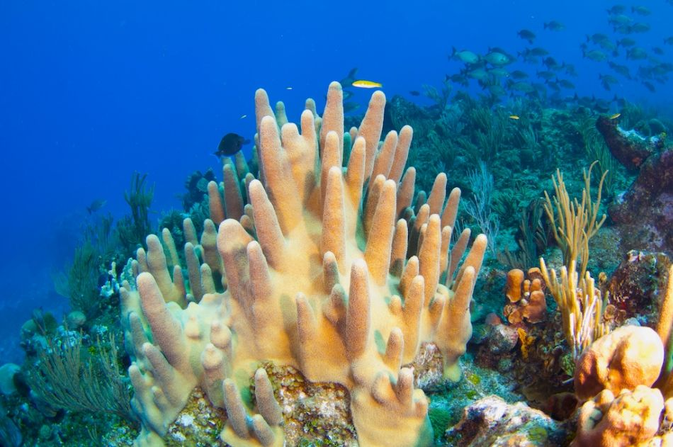 2-Tank Boat Dive in the Cayman Islands - Image 28