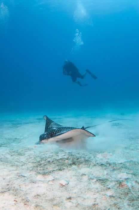 2-Tank Boat Dive in the Cayman Islands - Image 29