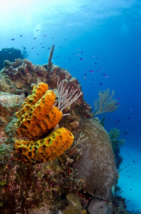 2-Tank Boat Dive in the Cayman Islands - Image 31