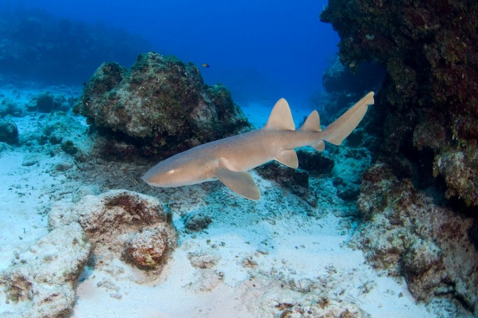 2-Tank Boat Dive in the Cayman Islands - Image 33