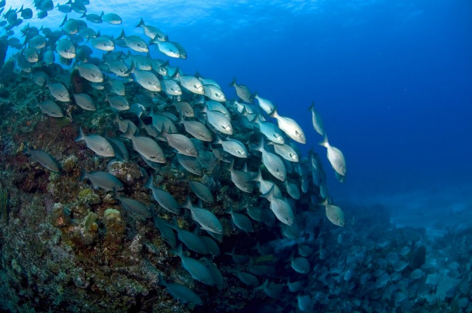 2-Tank Boat Dive in the Cayman Islands - Image 5