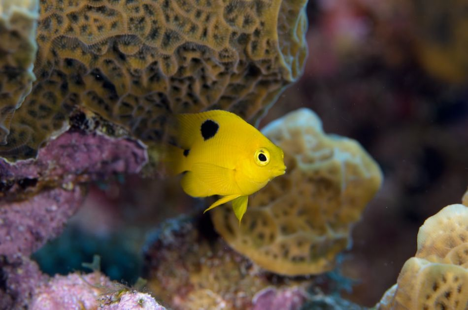 2-Tank Boat Dive in the Cayman Islands - Image 53
