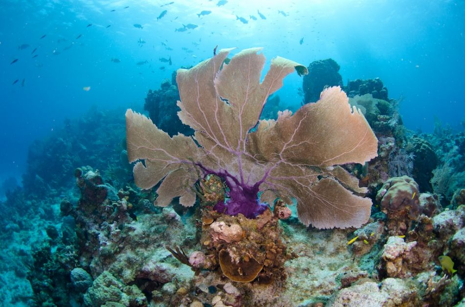 2-Tank Boat Dive in the Cayman Islands - Image 60