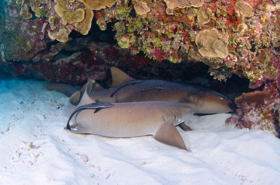 2-Tank Boat Dive in the Cayman Islands - Image 62