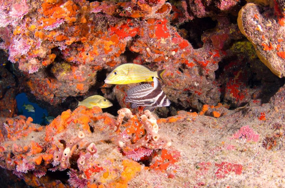 2-Tank Boat Dive in the Cayman Islands - Image 64