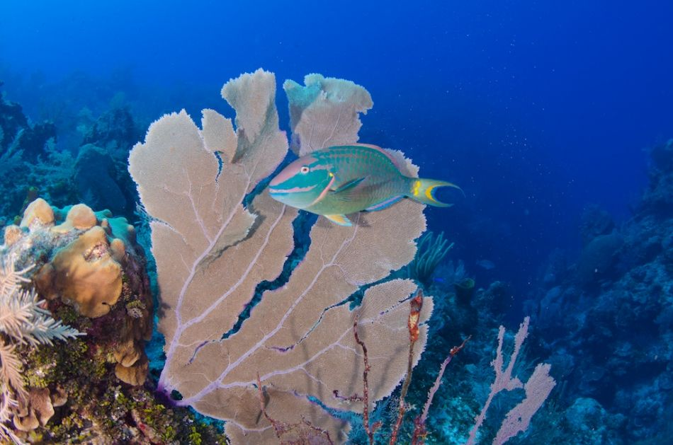 2-Tank Boat Dive in the Cayman Islands - Image 67