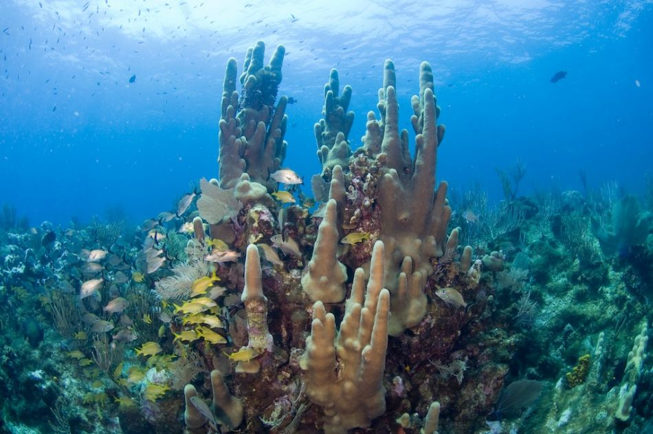 2-Tank Boat Dive in the Cayman Islands - Image 7