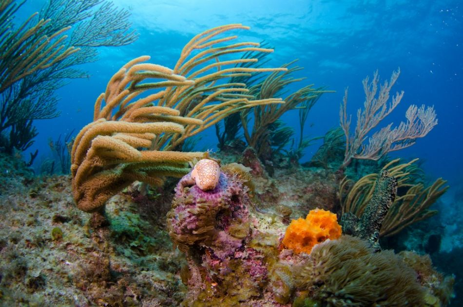 2-Tank Boat Dive in the Cayman Islands - Image 75