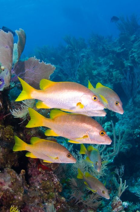 2-Tank Boat Dive in the Cayman Islands - Image 76