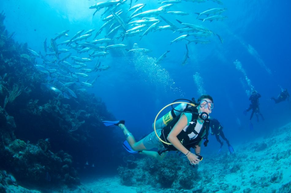 2-Tank Boat Dive in the Cayman Islands - Image 78