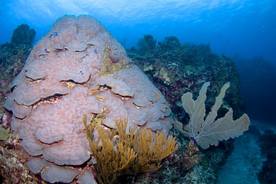2-Tank Boat Dive in the Cayman Islands - Image 8
