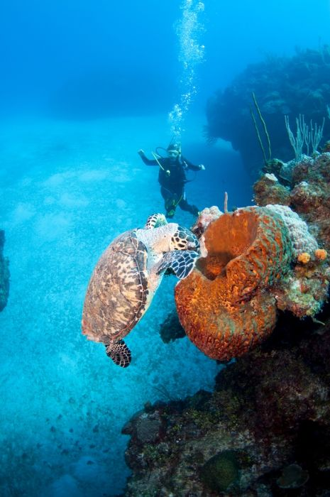 2-Tank Boat Dive in the Cayman Islands - Image 9