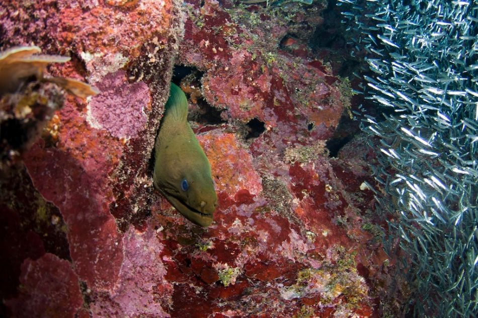 2-Tank Boat Dive in the Cayman Islands - Image 90
